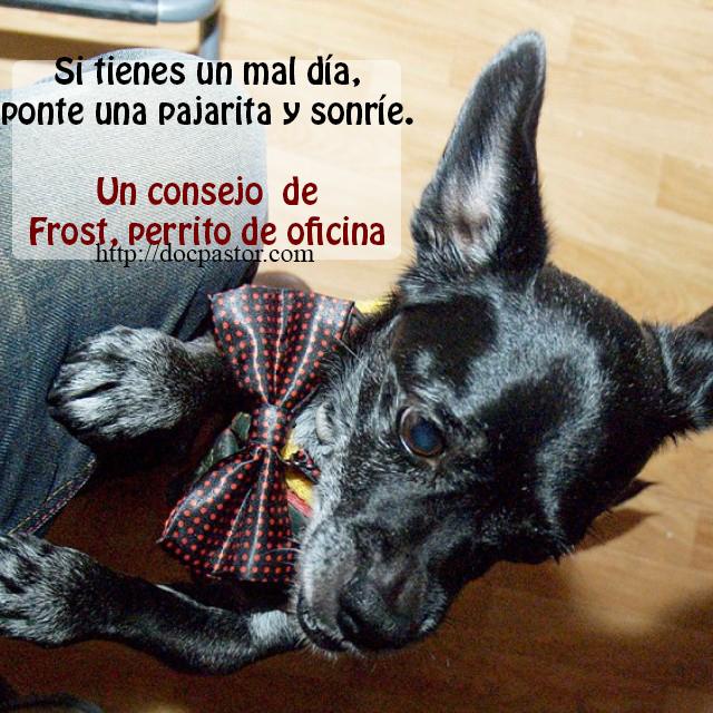 Los consejos de Frost, perrito de oficina (1)