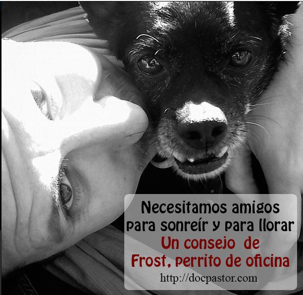 Los consejos de Frost, perrito de oficina (10)